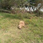No DF: Polícia Civil investiga morte de capivaras encontradas com marcas de tiros no Lago Paranoá.
